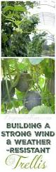 best 25 pumpkin trellis ideas on pinterest pumpkin growing