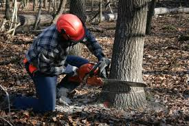 selling trees on your land for lumber thriftyfun