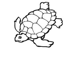 imagenes animales acuaticos para colorear dibujos animales marinos para colorear pintar e imprimir imagenes