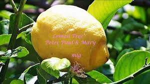 When Does A Lemon Tree Produce Fruit - peter paul u0026 may lemon tree lyrics youtube