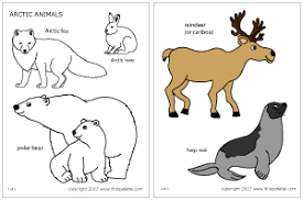 polar animals printable templates u0026 coloring pages