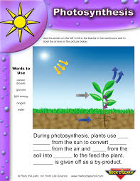 Movie Worksheets Bill Nye Life Science Crossword Photosynthesis Photosynthesis Life