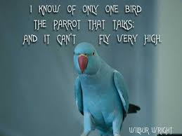 60 birds quotes and sayings gallery golfian com