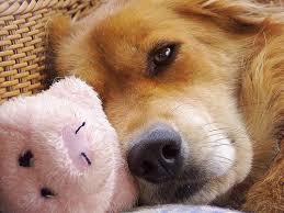 canine cushings disease diet