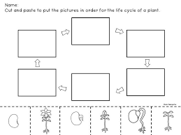 fun plant cycle activity sheet to do with your 2nd graders
