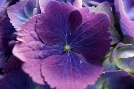 purple and blue flowers file blue purple flower forestwander jpg wikimedia commons