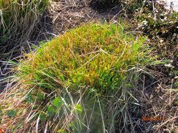 ornamental grass culture and maintenance glenns garden gardening