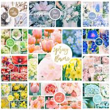 Pantone Colors by 42 Spring Flowers Inspired By Pantone Colors Of The Year