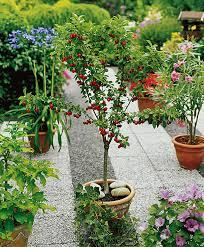 buy fruit trees bakker