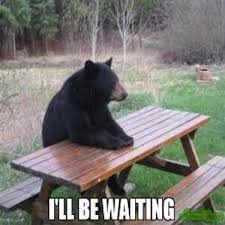 Bear At Picnic Table Meme - bear at picnic table meme at best of the funny meme