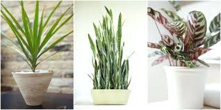 low light plants for office beautiful the best indoor plants for low light for stylish low light