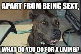 Sexy Dog Meme - apart from being sexy what do you do for a living pick up line