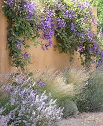 clematis lavender and grasses in a long plant bed or dress up a