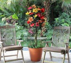 take a look at this double red hardy hibiscus tree by cottage