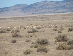 New Mexico wildlife tours images Tour of new mexico and texas jpg