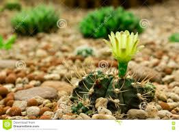 ornamental plant a cactus stock image image of botany 73770767