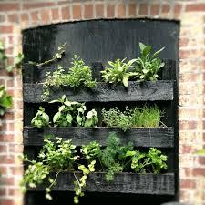 Herb Garden Winter - green city growers urban farming grow your own herbal tea