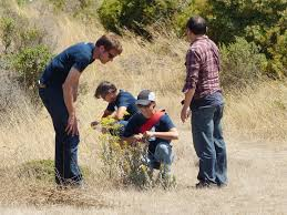 native plant seeds golden gate audubon societysalesforce helps bring nature back to