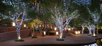 how to wrap outdoor trees with lights rainforest