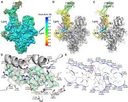 structural basis of transcription inhibition by fidaxomicin