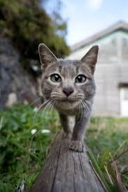 25 best cat selfie ideas on pinterest toby cavery dog chasing