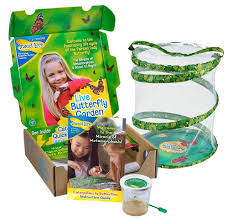 amazon com insect lore live butterfly growing kit toy 5