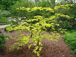native plants to illinois 45 best native plants for connecticut gardens images on pinterest