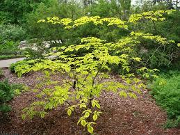 native plant nursery illinois 45 best native plants for connecticut gardens images on pinterest