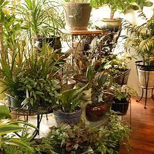 apartment plants house plants venus plants and flowers