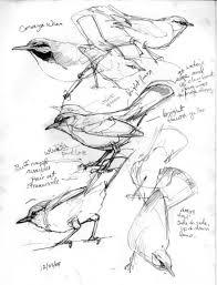 321 best art pen ink graphite images on pinterest drawings