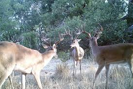 Reflective Deer Blind Fixed Position Archives Big Game Treestands