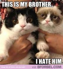 Grumpy Cat Coma Meme - pretty grumpy cat coma meme kayak wallpaper