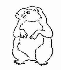 images groundhog coloring
