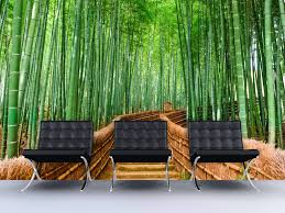 bamboo forest wall mural 6043