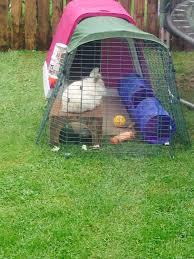 Large Rabbit Hutch With Run Eglu Go Rabbit Hutch Plastic House And Run For Rabbits
