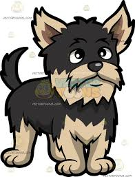 a scruffy yorkshire terrier yorkshire terrier