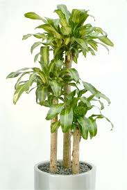 indoor plants that need no light indoor office plants no light office designs