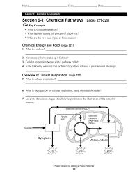 section 9 1 chemical pathways pages 221 225