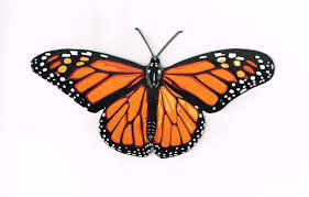 real butterfly clipart cliparthut free clipart