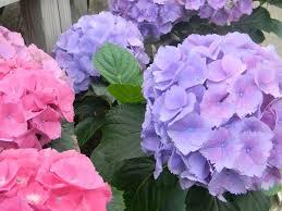 vegetable flowering plants albanese garden center