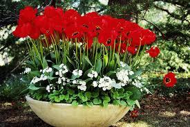 5 tips for a better spring flower garden