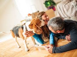 resume helps pet friendly rentals tips advice for renting with pets how a pet resume helps secure a rental property