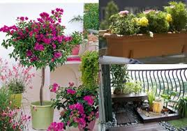 Ideas For Balcony Garden Luxury Balcony Garden Ideas Balcony Design Ideas
