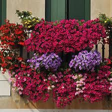 topfpflanzen balkon balkonpflanzen düngen pflanzen auf dem balkon düngen dünger