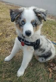 best 25 cutest puppy ever ideas on pinterest cutest puppy