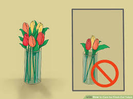 Tulip Vases How To Care For Fresh Cut Tulips 12 Steps With Pictures