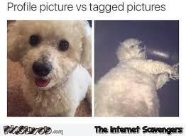 Profile Picture Memes - profile picture vs tagged picture dog meme pmslweb