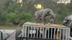 sad dog stories part 3 scared dog chained to roof of trailer boy