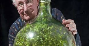 sealed bottle garden amazing 53 year old sealed bottle garden has not been watered in 40