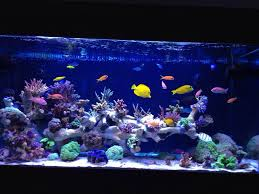 t5 lighting fixtures for aquariums ati powermodule hybrid club page 54 reef central online community